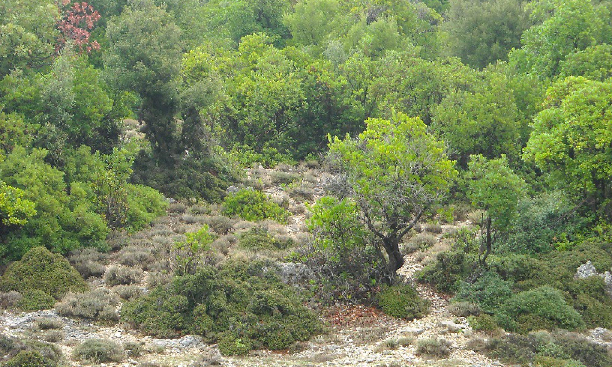 Αντιρρήσεις κατά Δασικού Χάρτη